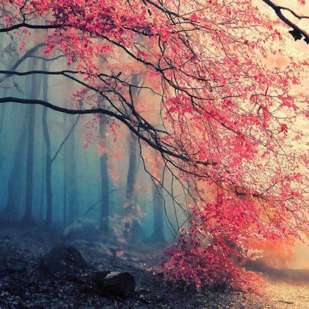 Photo de sous-bois dans des teintes bleues et roses pour illustrer l'automne